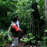 Rainforest interpretations/Interpretacion del Bosque