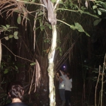 Night hiking in the jungle/ Caminata nocturna en la selva